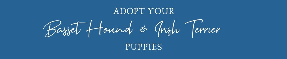 Adopt A Puppy From Stonewall Farm Bassets!